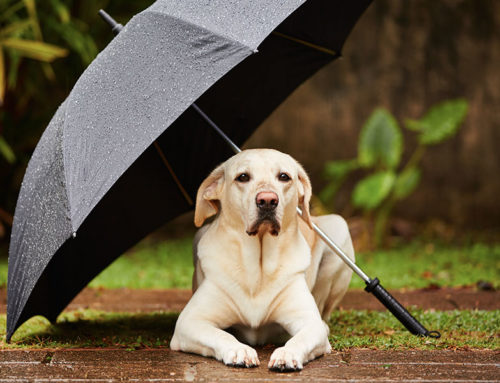 Preparing for pet for storm season