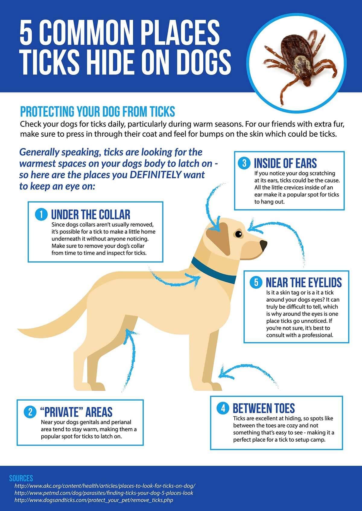 Pet Flea and tick control