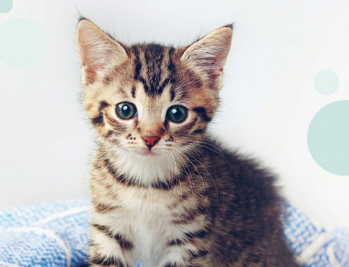 Your Guide To Kitten Health Care