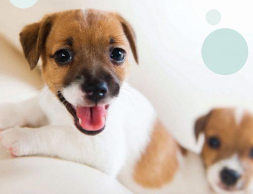 Puppy Health Care